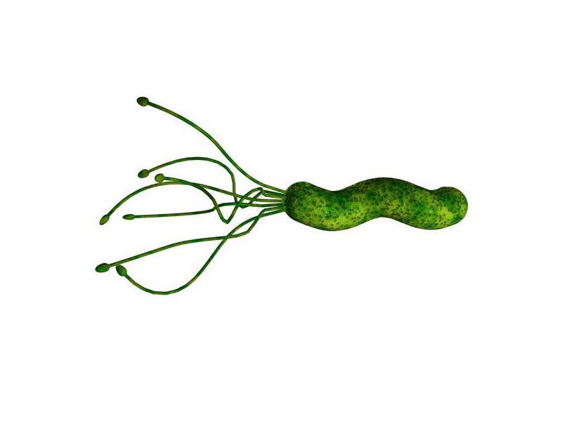 Хеликобактер пилори - это бактерия, которая обнаруживается у пациентов с заболеваниями желудка и двенадцатиперстной...