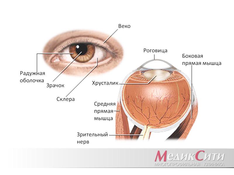 Кератит: причины образования, симптомы и лечение